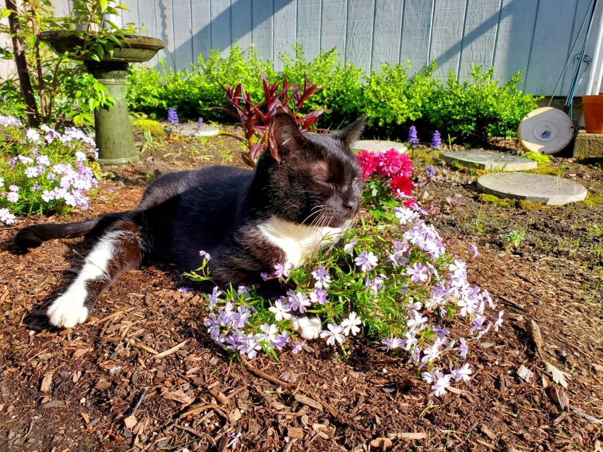 Scooter Cat in the Garden